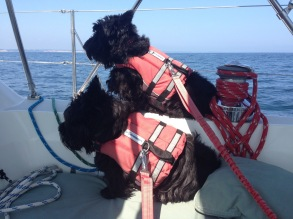 The Sailing Pups.